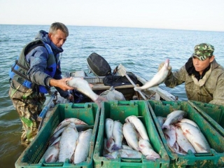 Atyrau rgn exported around 6 thou tons of fish