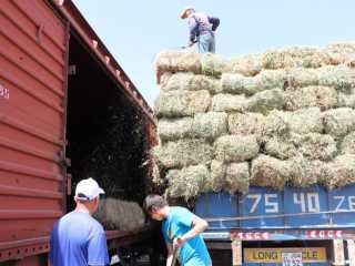 Четыре вагона сена отправили из Туркестанской области мангистауским фермерам
