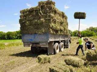 Шардаринцы отгрузили в Мангыстау около 300 тонн кормов