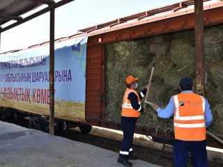 Из Туркестанской области в западные регионы отгружено 67 вагонов кормов